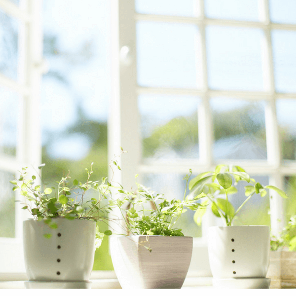 Window Cleaning Tips for Spring